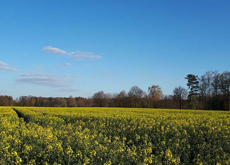 Blühendes Feld